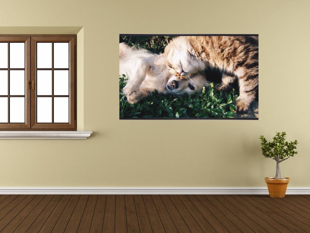 Plakáty na zeď - Kočka a pes - obrazový plakát - luxusní koutovaný foto papír 180g/m2 včetně lišt a háčků